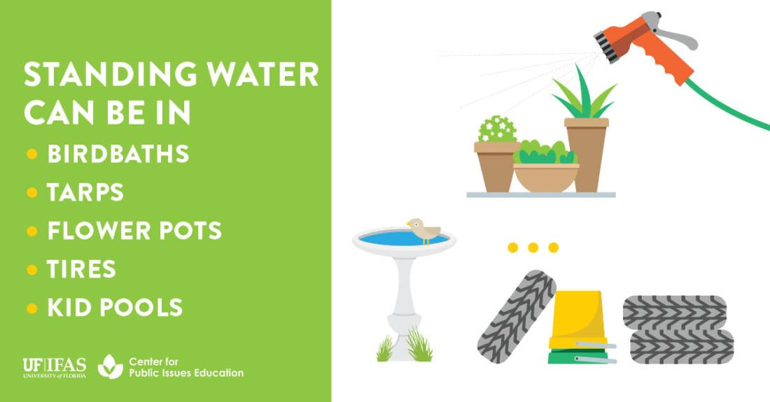 Infographic listing sources of standing water around the home