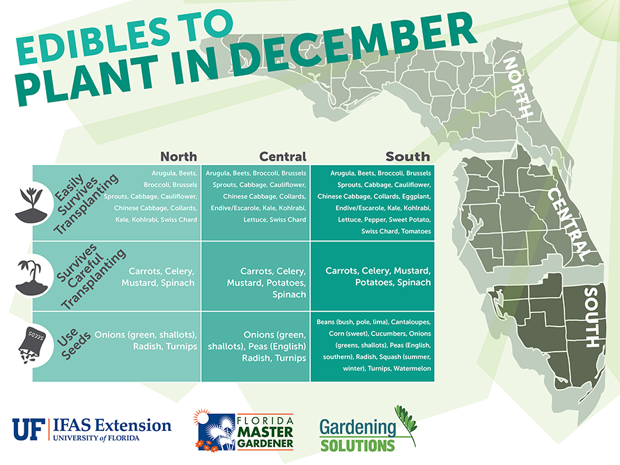 Illustration listing what edibles to plant in December for Florida
