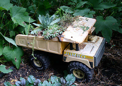A toy dump truck with succulents planted in the back